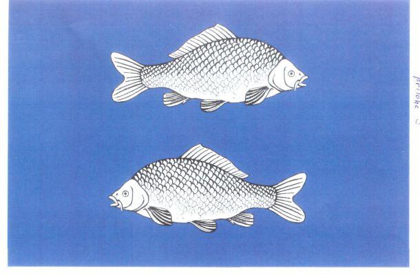Vlajka Rybného